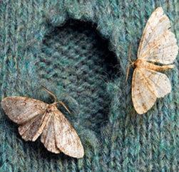 MOTTEN: Ein Schmetterling im Kleiderschrank